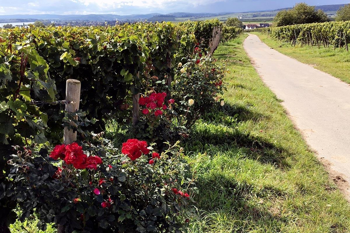 Das Weinfernsehprogramm | Wein-Plus