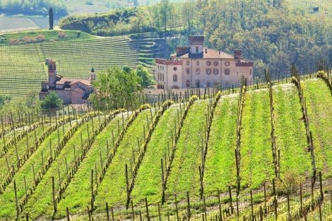 BEST OF Barolo